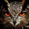 Аватар пользователя Maya